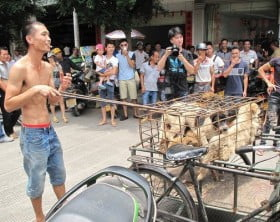 rsz_china-dog-meat-festival-japan-reactions-01