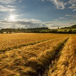 nature___fields_sunrise_over_the_field_043028_